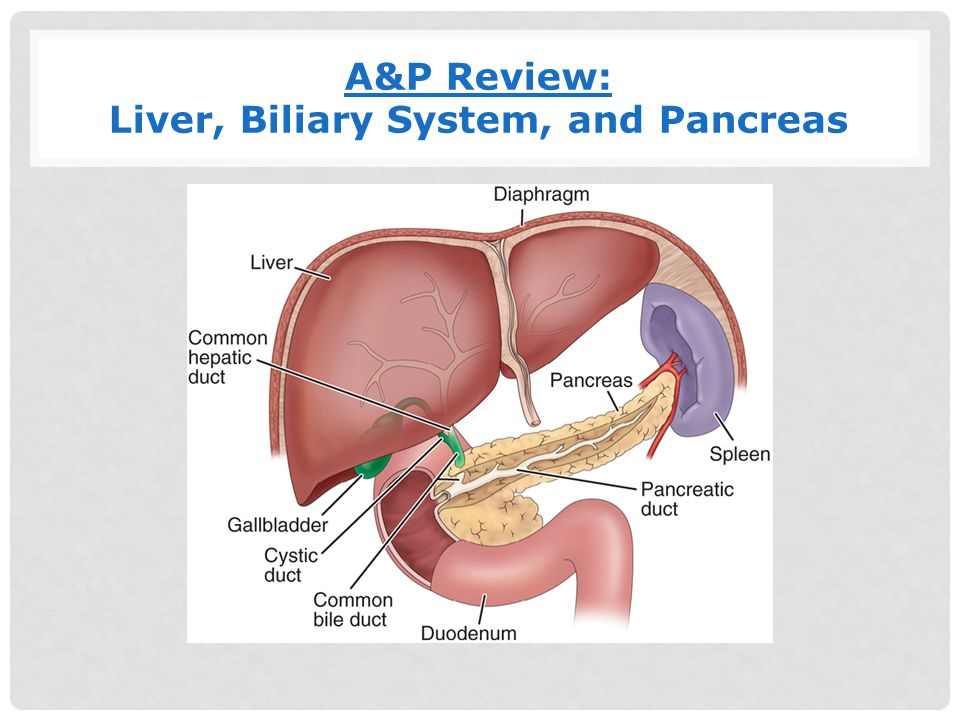 Biliary System Anatomy Choice Image - human body anatomy