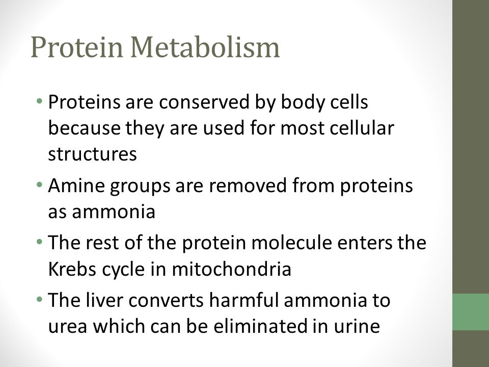 Protein Metabolism Proteins are conserved by body cells because they are used for most cellular structures.