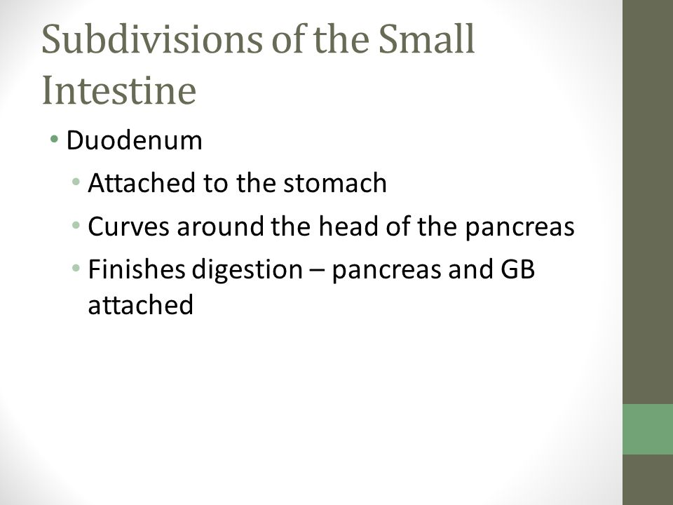 Subdivisions of the Small Intestine