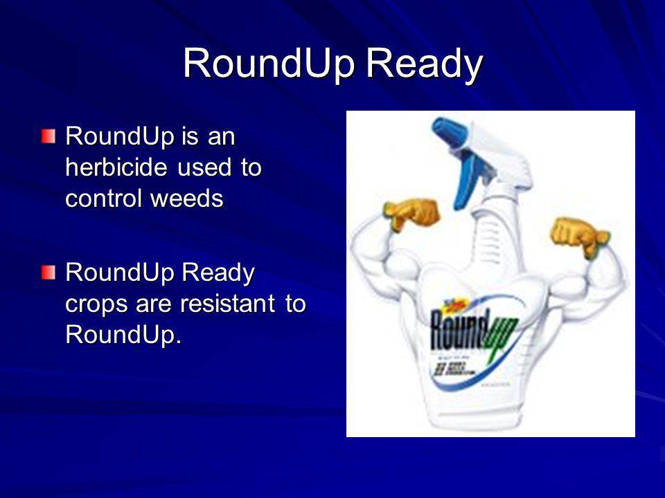 RoundUp Ready RoundUp is an herbicide used to control weeds
