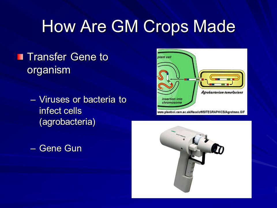 How Are GM Crops Made Transfer Gene to organism