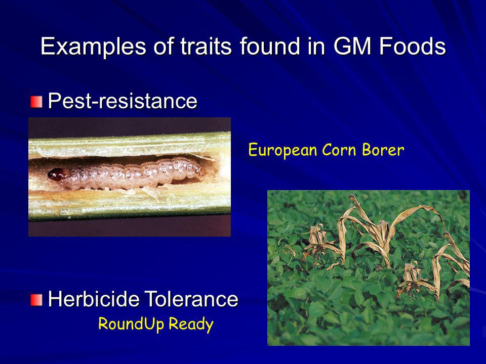 Examples of traits found in GM Foods