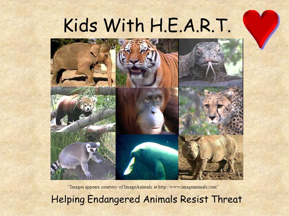 Kids With H.E.A.R.T. Helping Endangered Animals Resist Threat