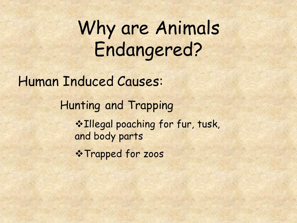 Why are Animals Endangered