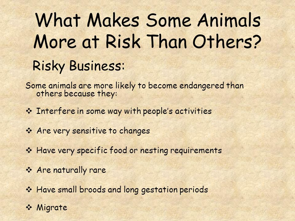 What Makes Some Animals More at Risk Than Others