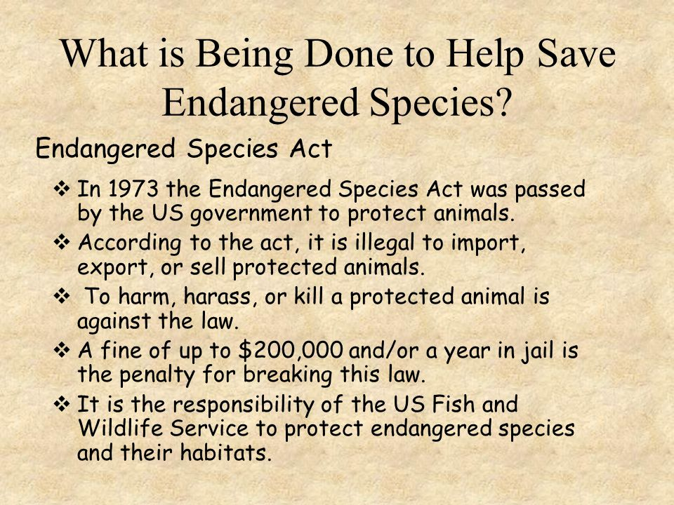 What is Being Done to Help Save Endangered Species