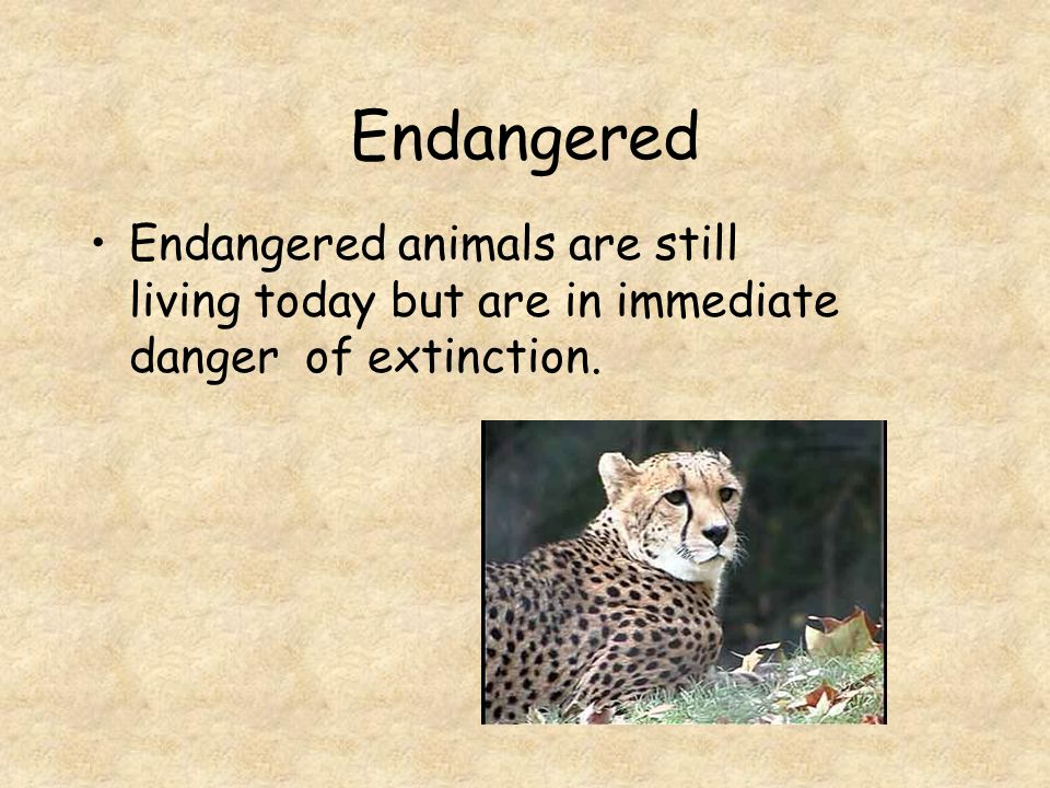 Endangered Endangered animals are still living today but are in immediate danger of extinction.