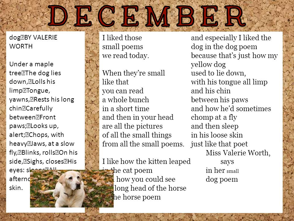 and especially I liked the dog in the dog poem small poems