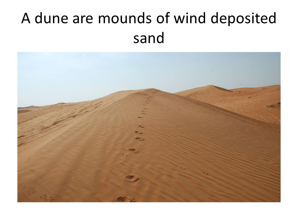 A dune are mounds of wind deposited sand