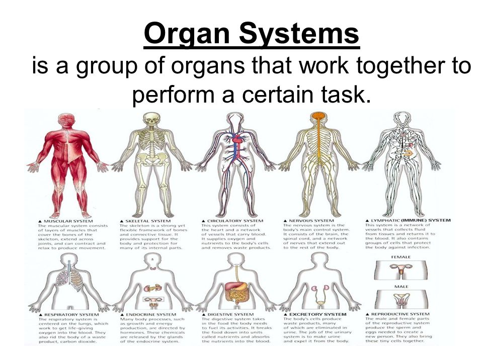is a group of organs that work together to perform a certain task.