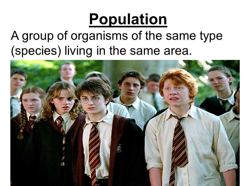Population A group of organisms of the same type (species) living in the same area.