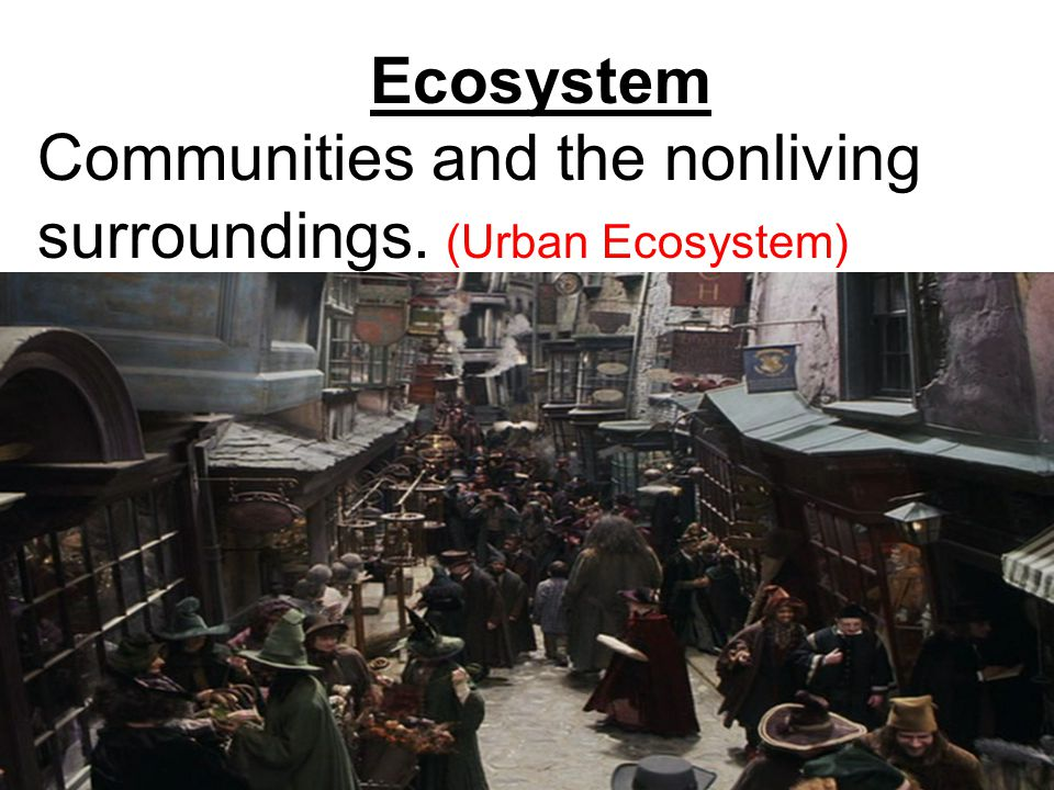 Ecosystem Communities and the nonliving surroundings. (Urban Ecosystem)
