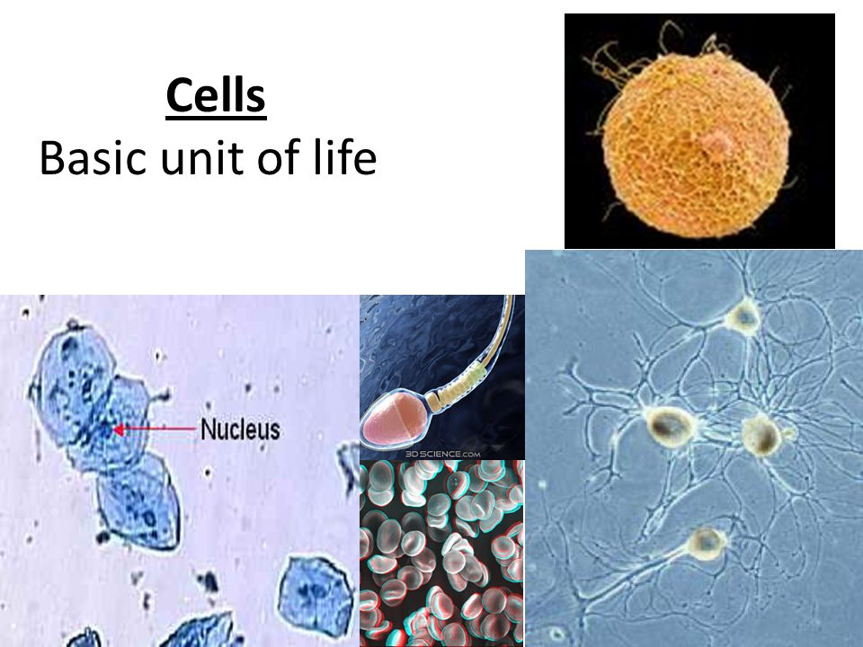 Cells Basic unit of life