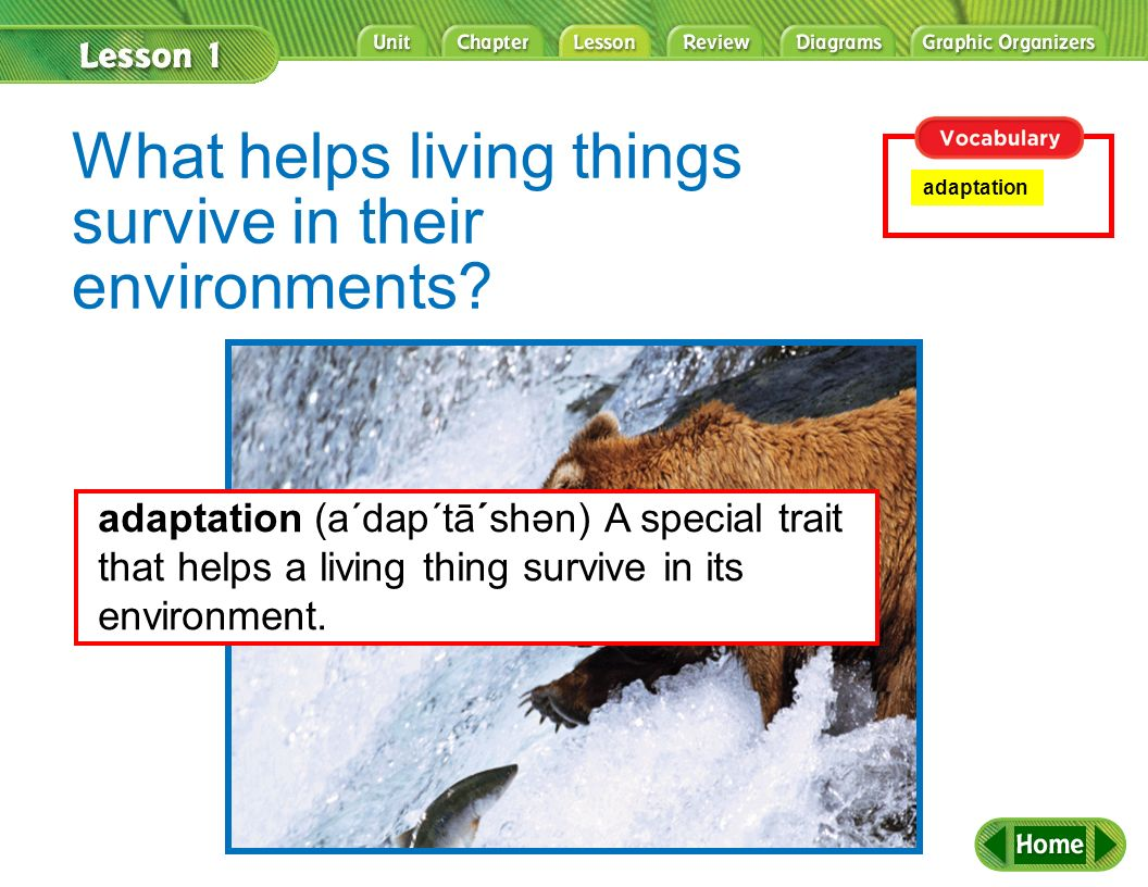 What helps living things survive in their environments