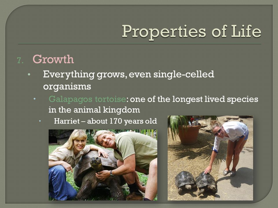 Properties of Life Growth