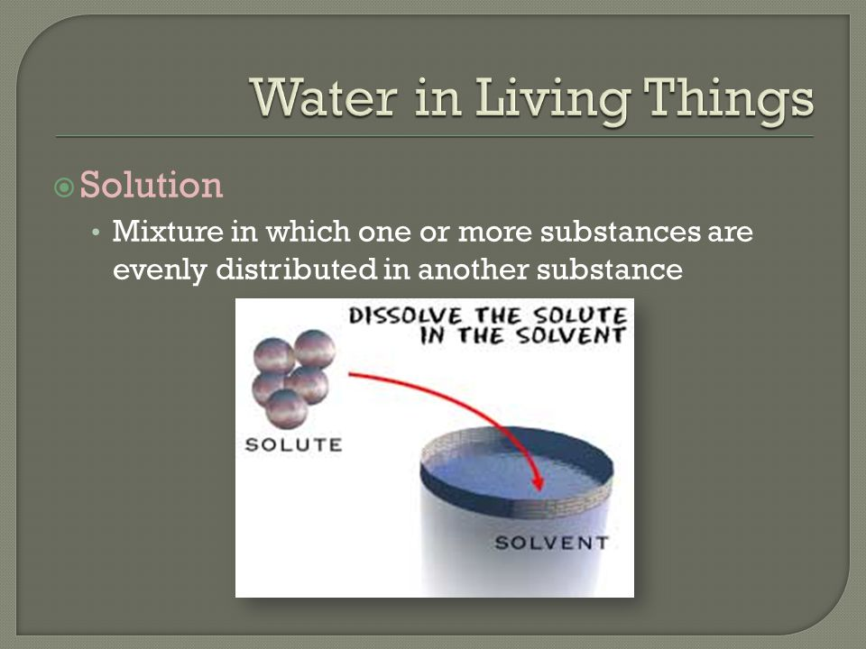 Water in Living Things Solution