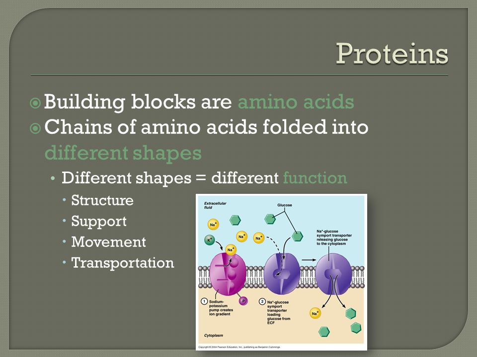 Proteins Building blocks are amino acids