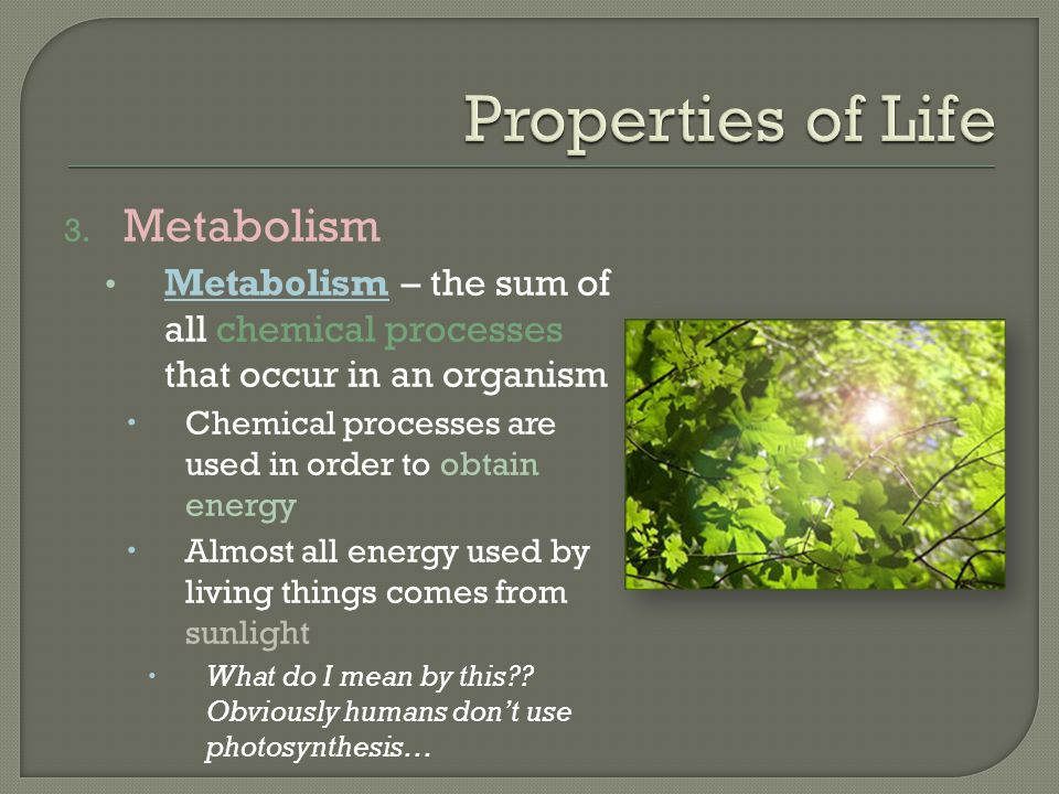 Properties of Life Metabolism