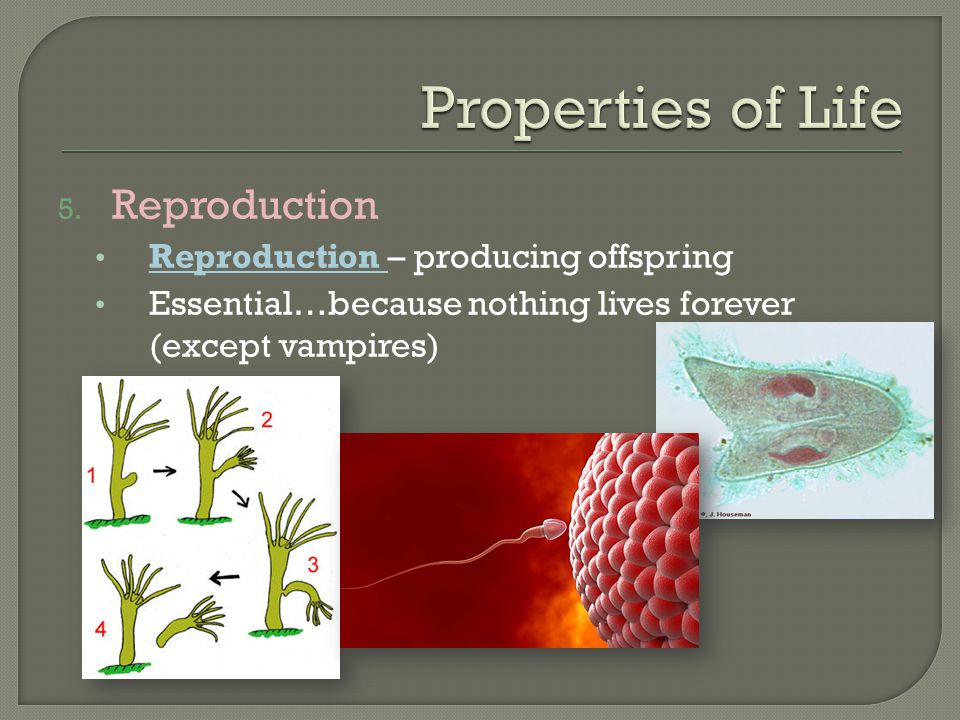 Properties of Life Reproduction Reproduction – producing offspring