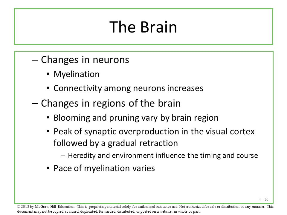 The Brain Changes in neurons Changes in regions of the brain