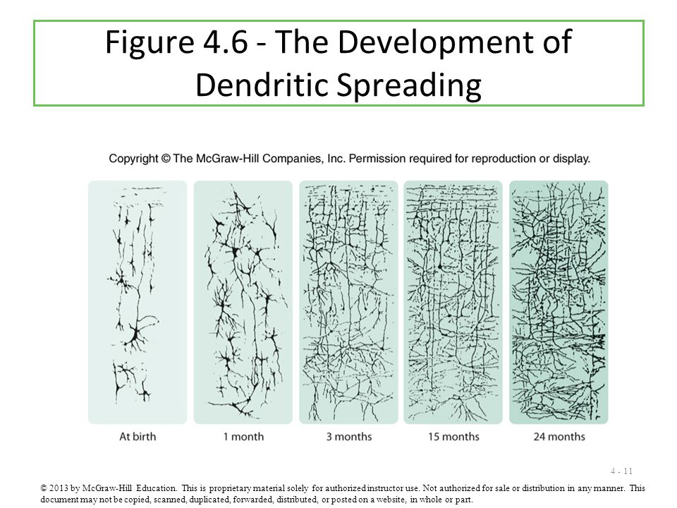 Figure 4.6 - The Development of Dendritic Spreading