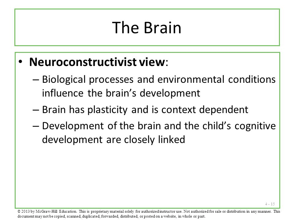 The Brain Neuroconstructivist view: