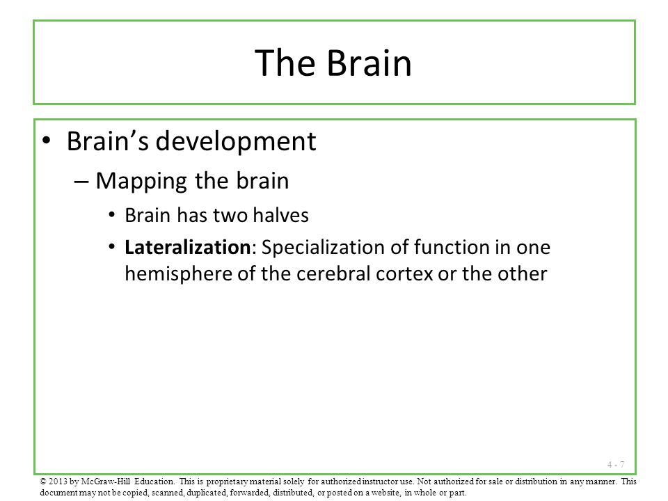 The Brain Brain's development Mapping the brain Brain has two halves