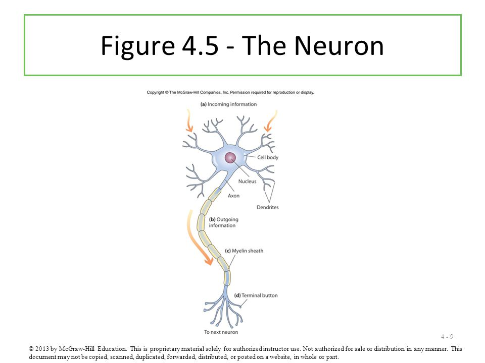 Figure 4.5 - The Neuron