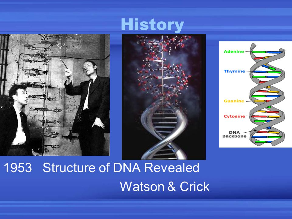 History 1953 Structure of DNA Revealed Watson & Crick