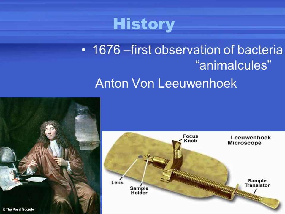 History 1676 –first observation of bacteria animalcules