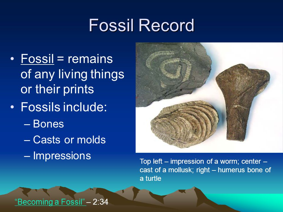 Fossil Record Fossil = remains of any living things or their prints