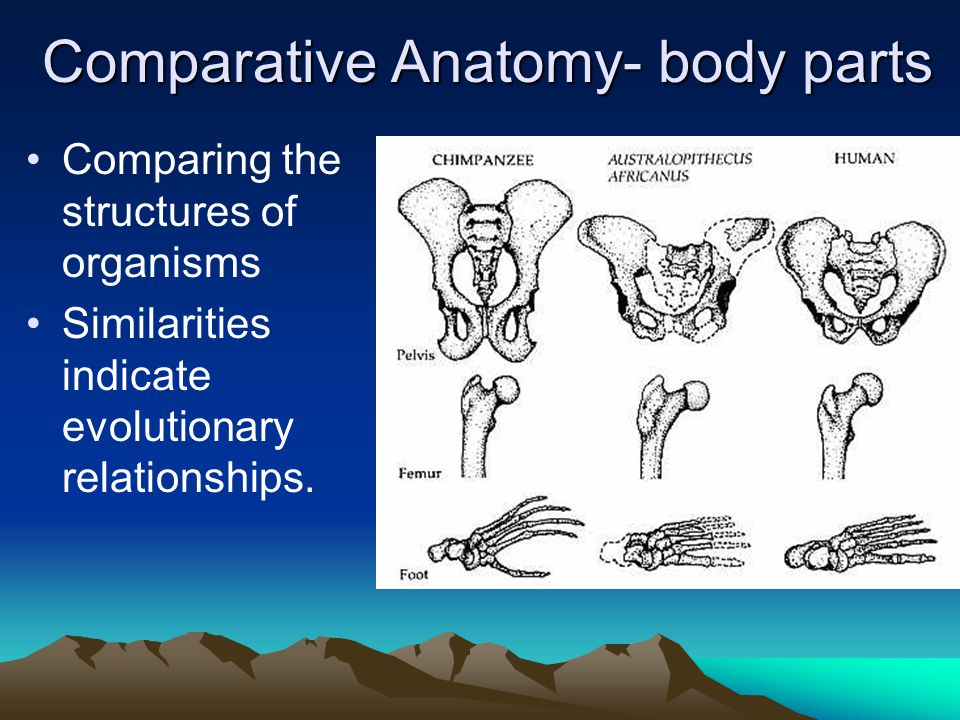 Comparative Anatomy- body parts