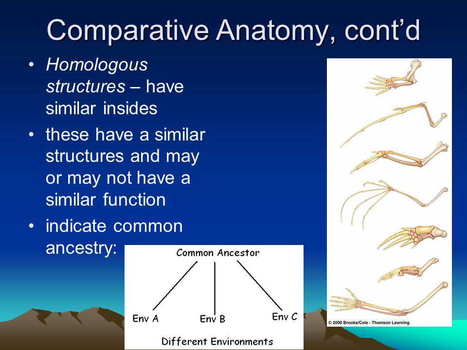 Comparative Anatomy, cont'd