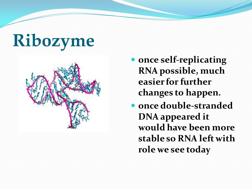 Ribozyme once self-replicating RNA possible, much easier for further changes to happen.