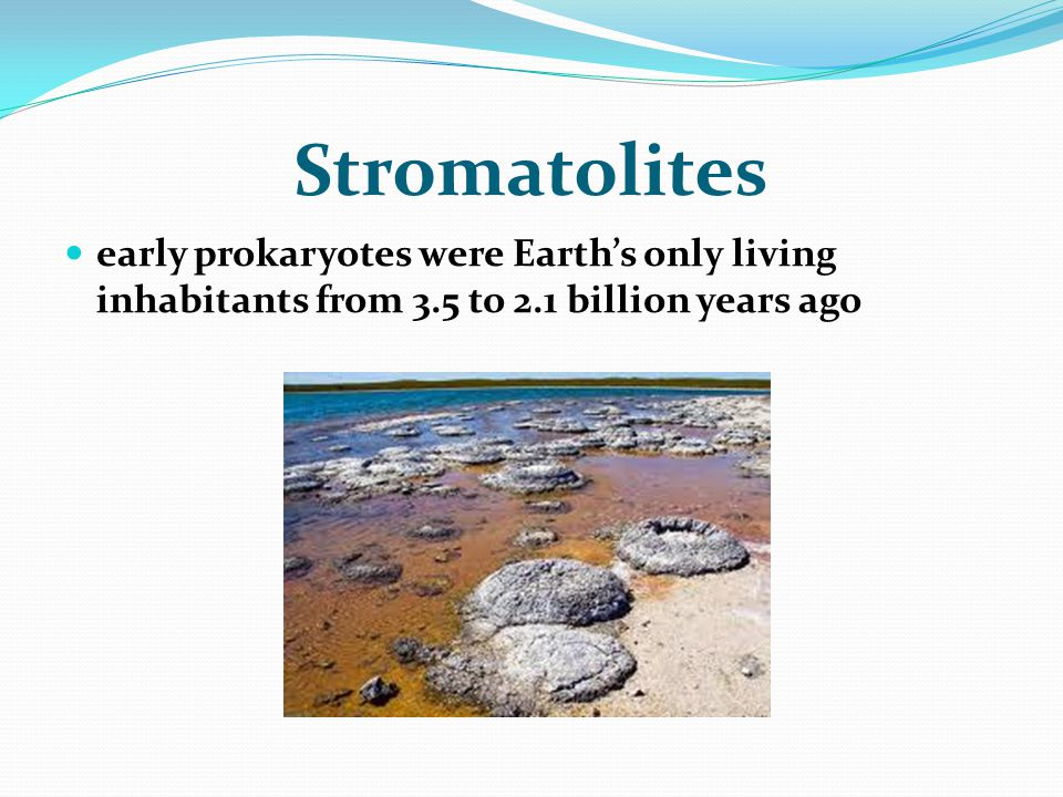 Stromatolites early prokaryotes were Earth's only living inhabitants from 3.5 to 2.1 billion years ago.