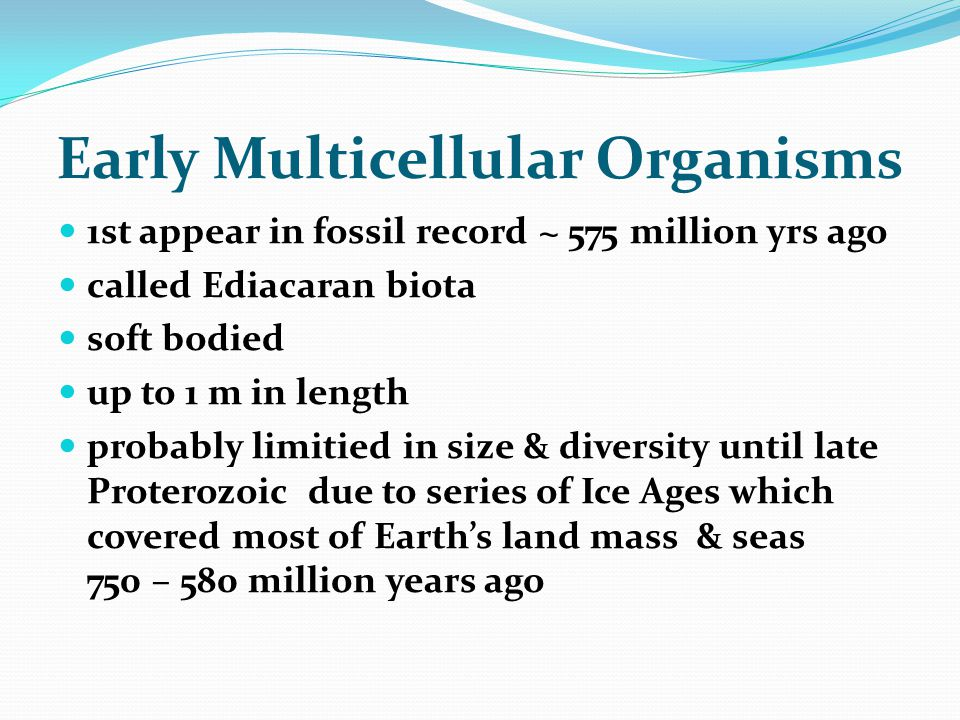 Early Multicellular Organisms