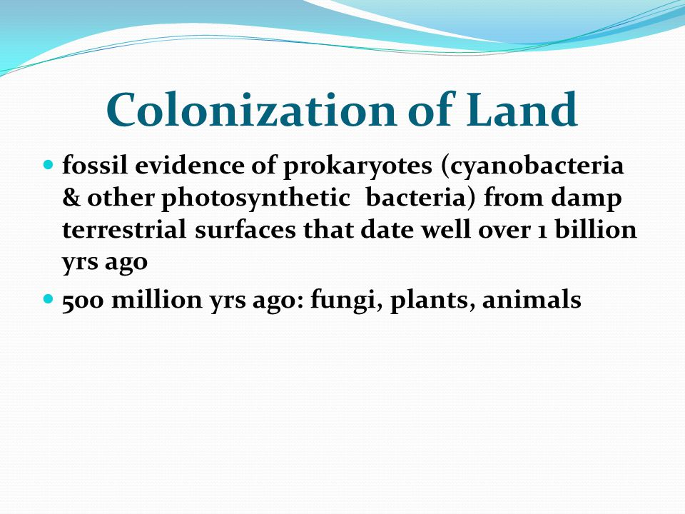 Colonization of Land