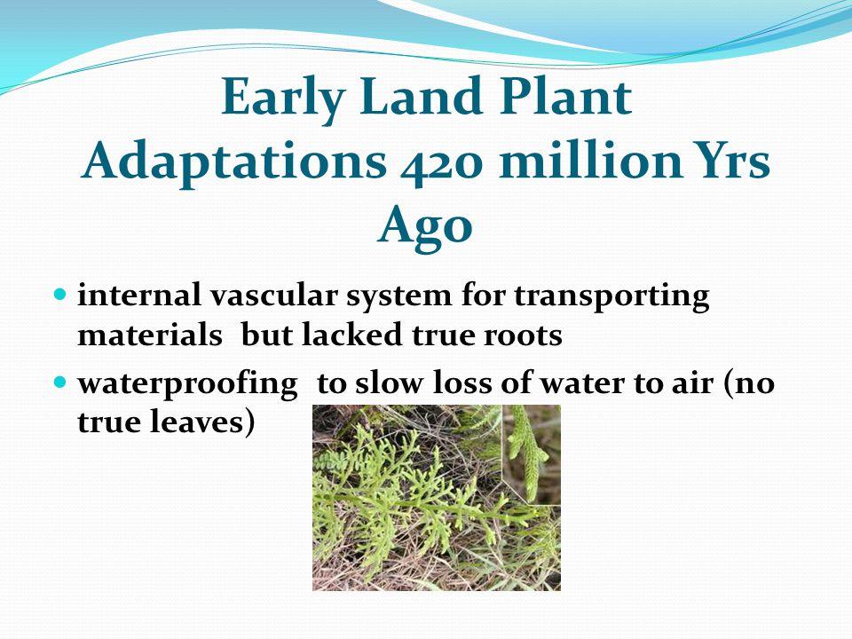 Early Land Plant Adaptations 420 million Yrs Ago