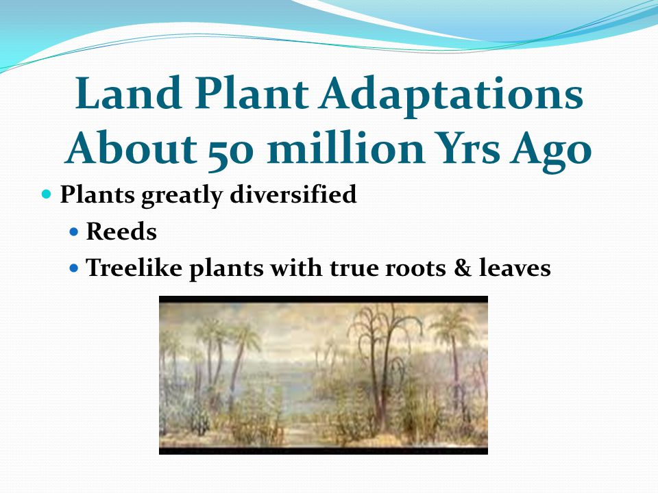 Land Plant Adaptations About 50 million Yrs Ago