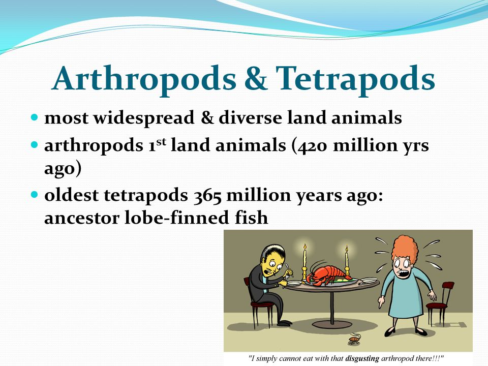 Arthropods & Tetrapods
