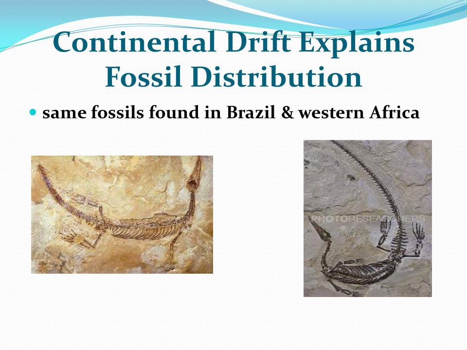 Continental Drift Explains Fossil Distribution