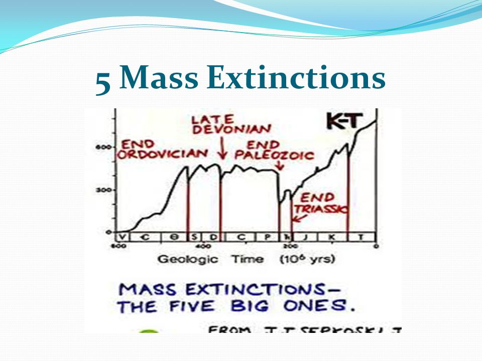 the five mass extinctions Discover the diversity of life on earth, the impacts of five past mass extinctions and the prospect of a sixth extinction today.