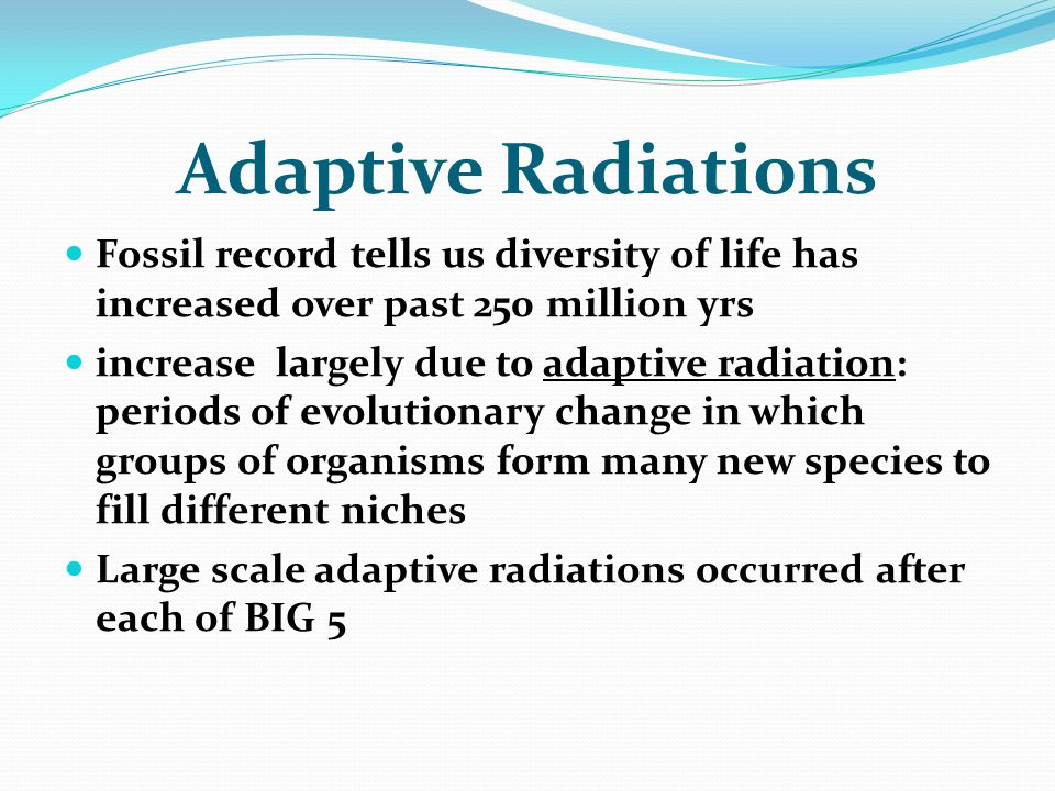 Adaptive Radiations Fossil record tells us diversity of life has increased over past 250 million yrs.