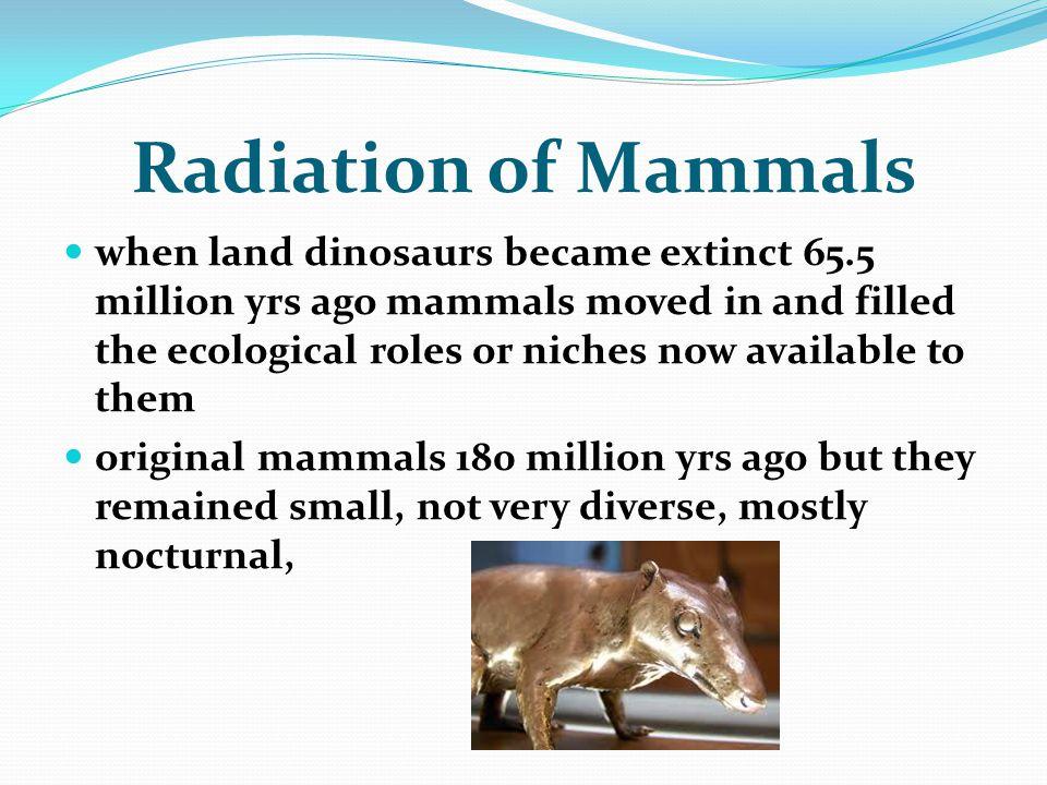 Radiation of Mammals
