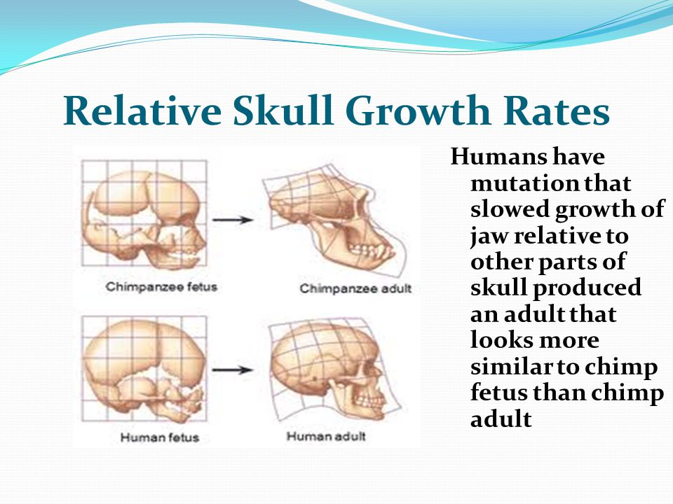 Relative Skull Growth Rates