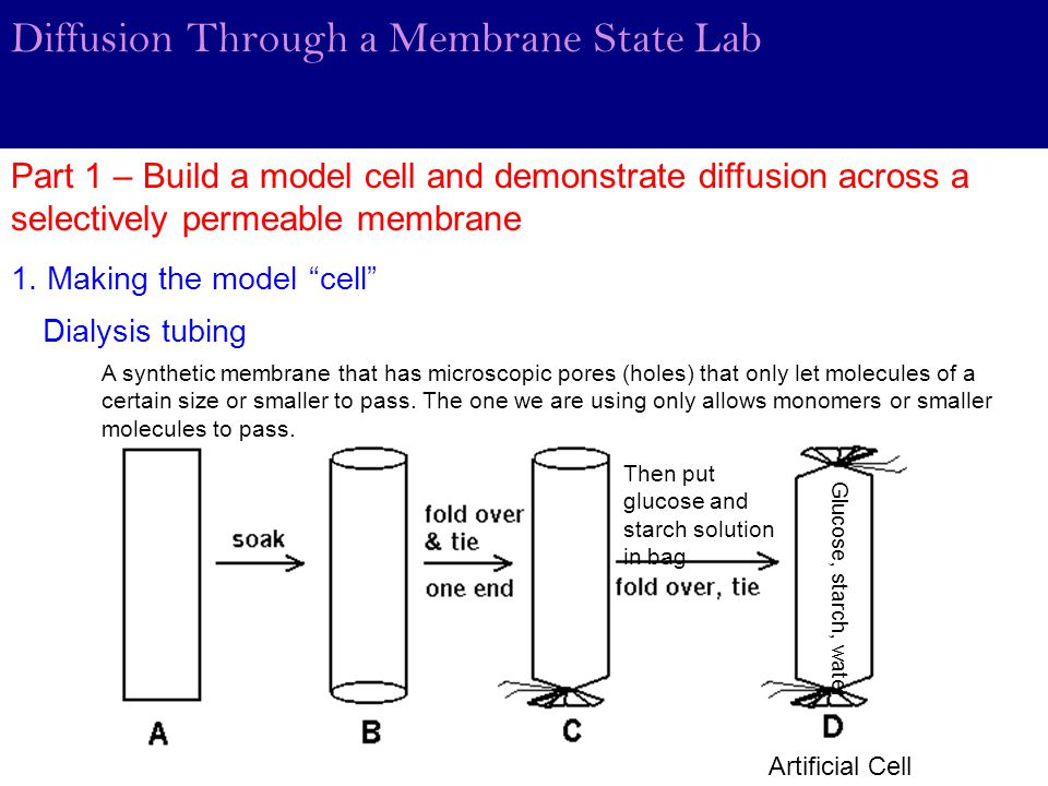diffusion throuh a selectively permeable membrane lab report