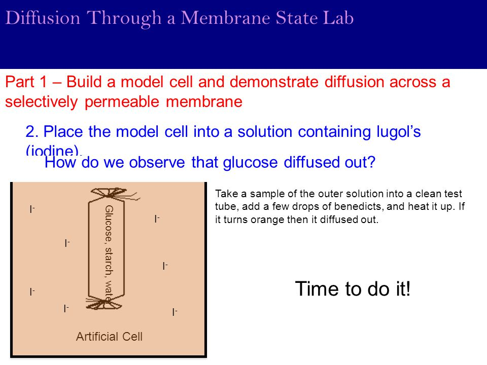 Diffusion Through a Membrane State Lab