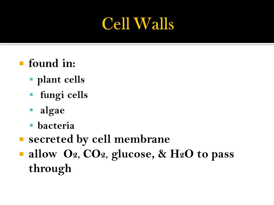 Cell Walls found in: secreted by cell membrane