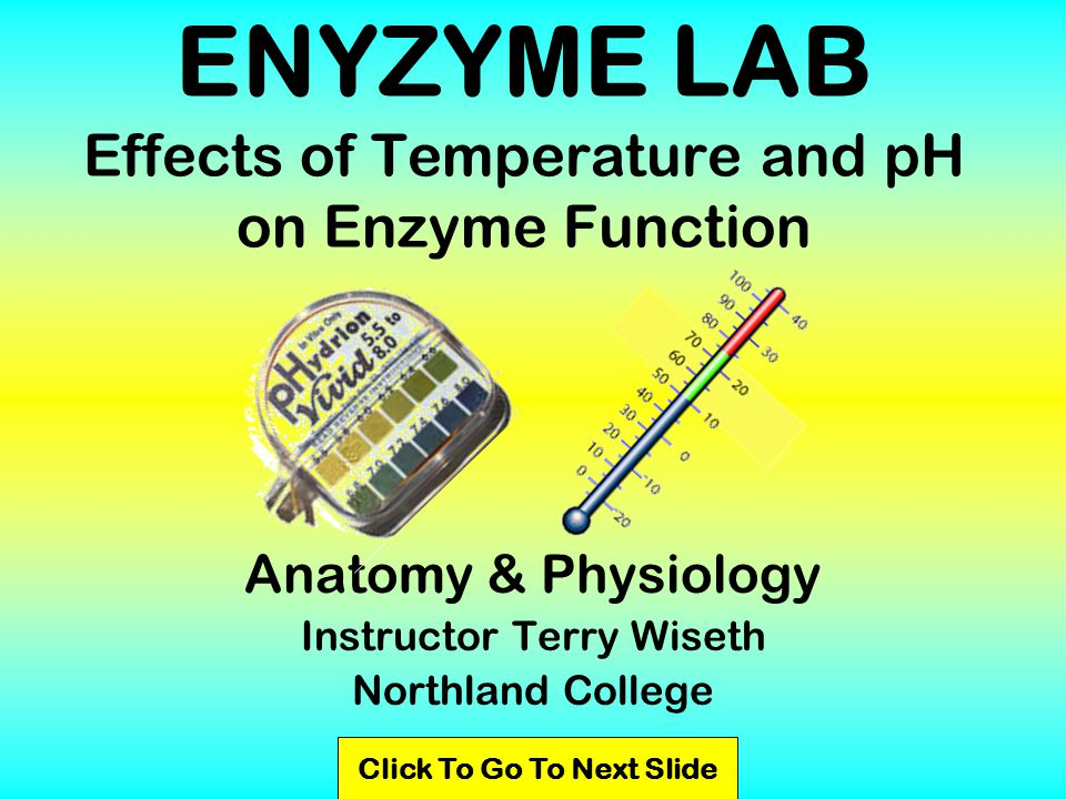 ENYZYME LAB Effects of Temperature and pH on Enzyme Function