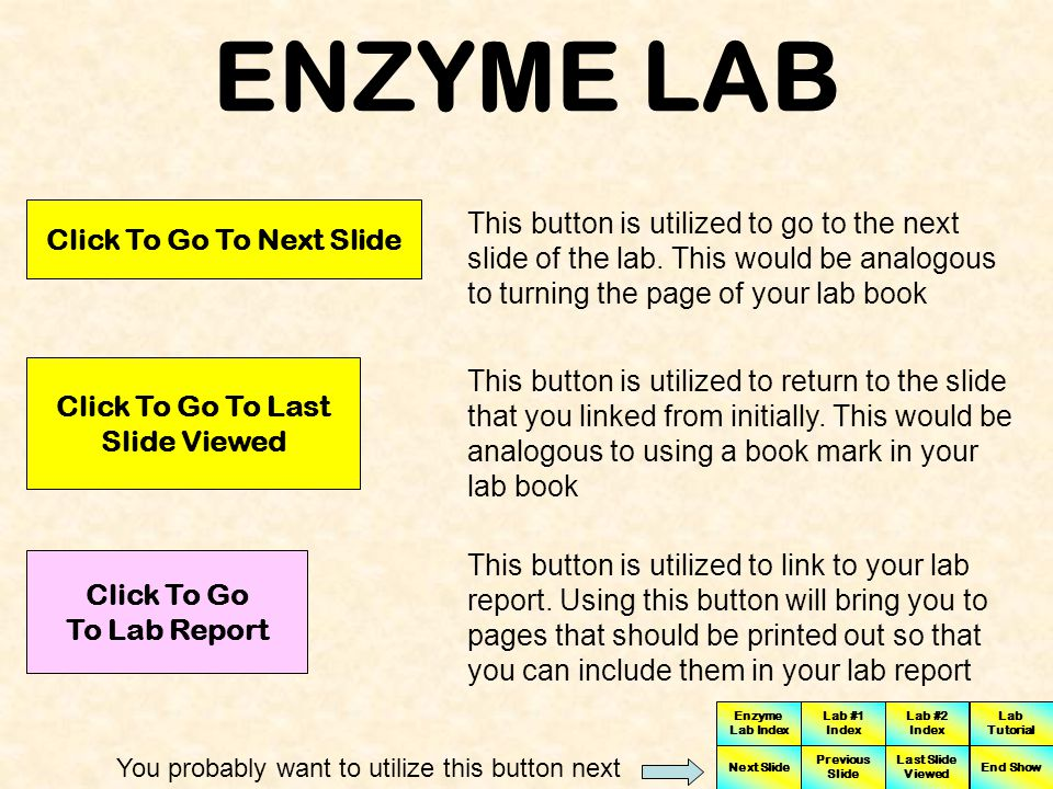 ENZYME LAB Click To Go To Next Slide.